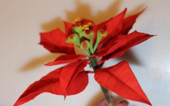 Tutorial: Stella di Natale in Pasta di Gomma