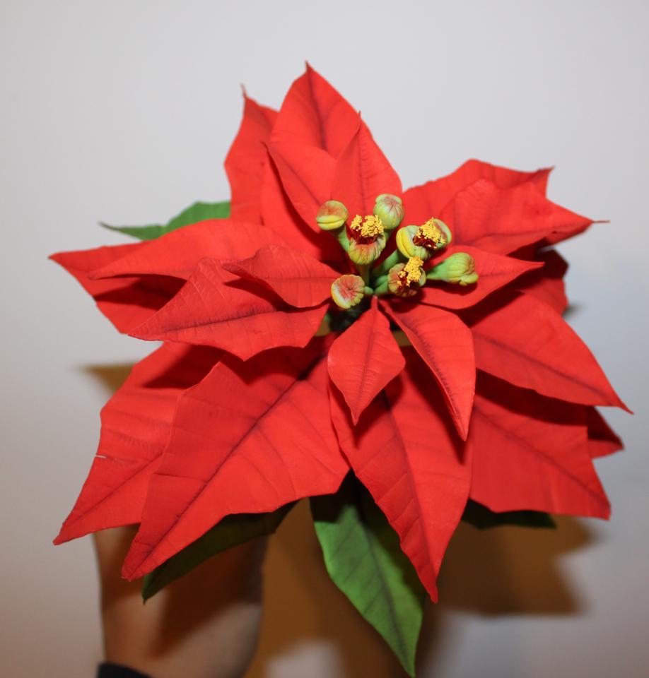 Terminare la Stella di Natale